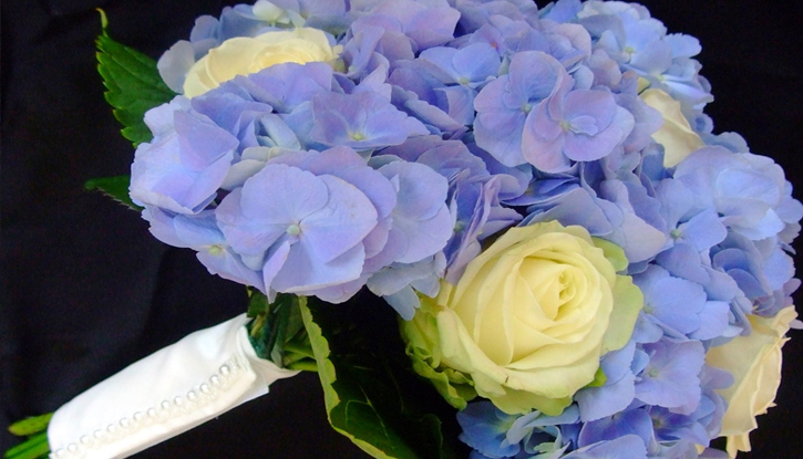 Blue Hydrangea and White Rose